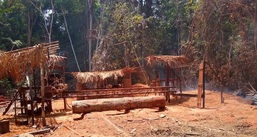 Pará: Doze pessoas são resgatadas da escravidão em área de desmatamento